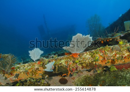 Colorful Coral Encrusted Shipwreck - Roatan, Honduras - stock photo