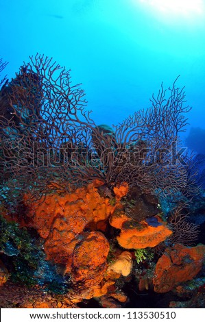 Colorful Coral Reef - stock photo