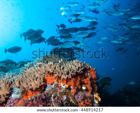 Colorful coral reef and school of fish in Raja Ampat, Indonesia.
