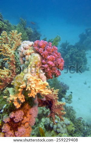colorful coral reef at the bottom of tropical sea on a blue water background- underwater - stock photo