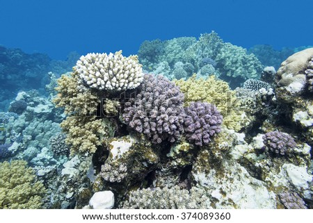 colorful coral reef at the bottom of tropical sea, underwater - stock photo