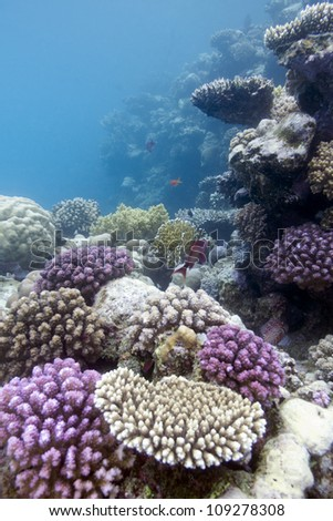 colorful coral reef with hard corals - stock photo
