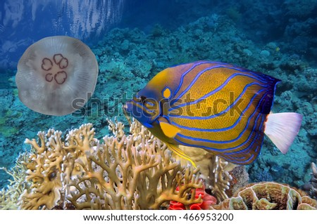 Colorful coral reef with many fishes and sea turtle. Red Sea.
