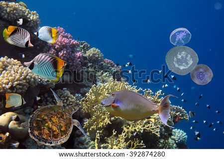 Colorful coral reef with many fishes and sea turtle. Red Sea, Egypt - stock photo