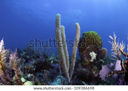 Colorful coral with blue water background in Key Largo, Florida. - stock photo