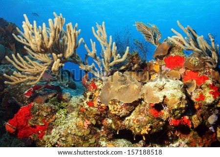 Colorful Corals against Blue Water and Surface, Cozumel, Mexico - stock photo