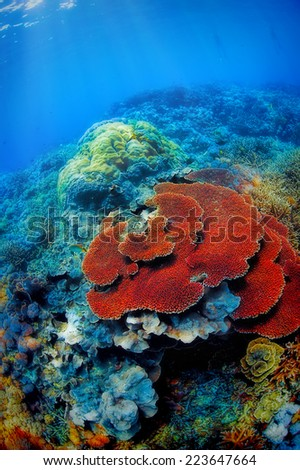 Colorful corals in the underwater landscape on Bali, Indonesia - stock photo