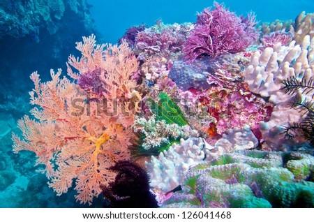 Colorful corals marine life,  Kentang. Taiwan - stock photo