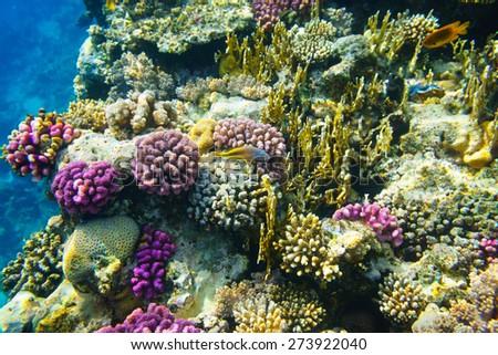 Colorful corrals in sea - stock photo