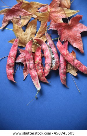 Colorful cranberry beans with russet and gold liquidambar leaves on a blue background