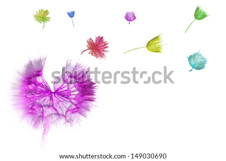 Colorful Dandelion with flying seeds - stock photo