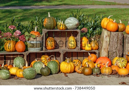 Colorful decorative pumpkin collection
