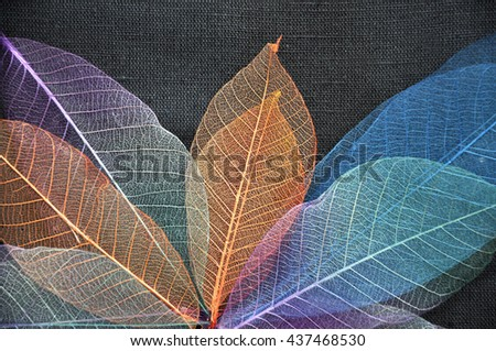 Colorful dried leaves on dark fabric background - stock photo