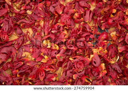 Colorful dried nutmeg - stock photo