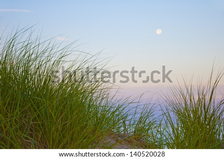 Colorful dune grass and moonrise on beach - stock photo