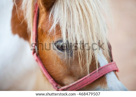 Colorful dwarf horse