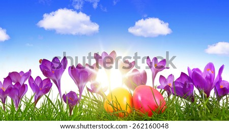 Colorful Easter eggs and purple crocuses. - stock photo