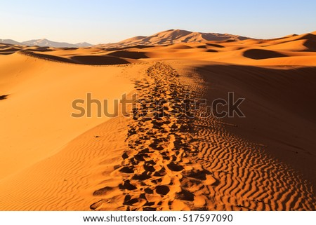 Colorful evening sun light shining on the orange sand dunes of the Erg Chebbi desert near Merzouga in Marocco