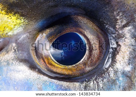 colorful eye of the fish, macro.Wallpaper, natural texture background