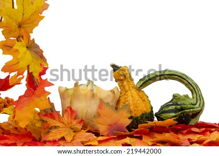 Colorful Fall Border, Three small gourds on fall leaves isolated on white - stock photo
