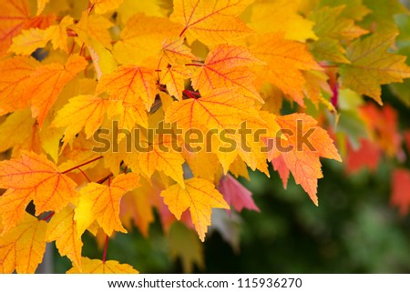 Colorful Fall Leaves - stock photo