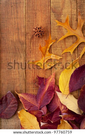 Colorful Fall Leaves on Rustic Wood Boards with Space for Copy or Text.