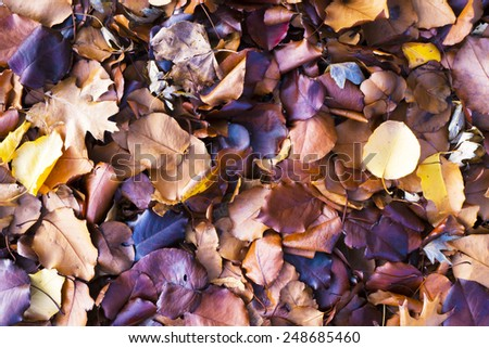 Colorful fall leaves on the ground - stock photo