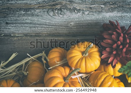 Colorful Fall Mini Pumpkins with a Burgundy Chrysanthemum on Hay against Rustic Barn Wood Board Wall with room or space for copy, text, your words.  Horizontal faded grunge instagram, mood lighting - stock photo