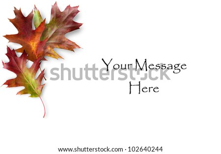 Colorful Fall Oak leaves framing a message area - stock photo
