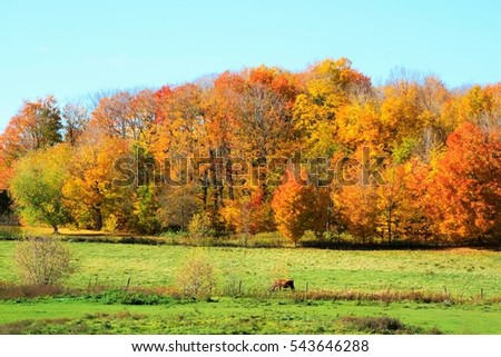Colorful fall scene with orange, red, and yellow trees