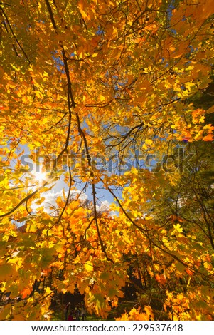 Colorful fall scenery landscapes. - stock photo