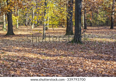 Colorful fallen autumn leaves covering the ground in the park