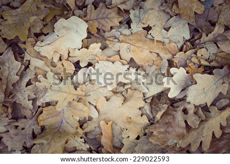 colorful fallen leaves background