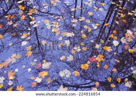 colorful falling autumn leaves on water with tree and sky reflection  - stock photo