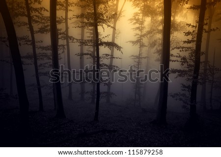 colorful fantasy forest - stock photo