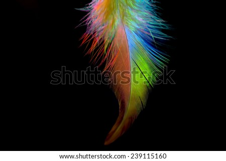 Colorful feather isolated on black background - stock photo