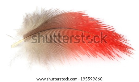 Colorful feather of macaw bird