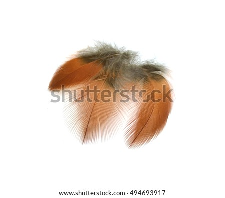 Colorful feathers, bird feathers On a white background