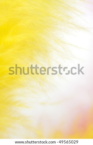 colorful feathers easter background - stock photo