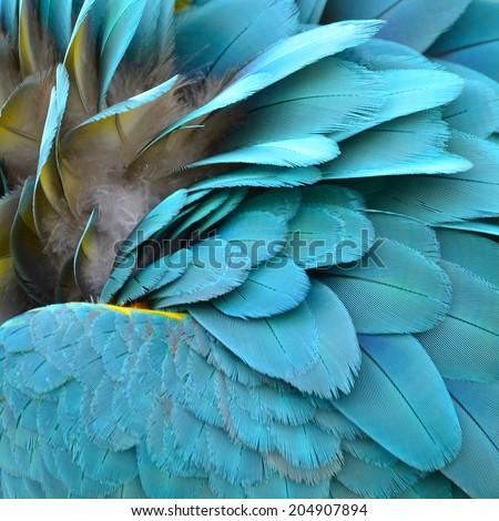 Colorful feathers, Harlequin Macaw feathers background  - stock photo