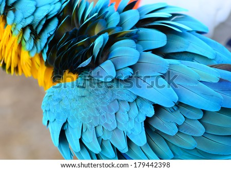 Exotic Bird Stock Photos, Images, & Pictures | Shutterstock