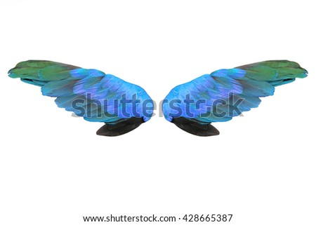 Colorful feathers wings isolated on white background
