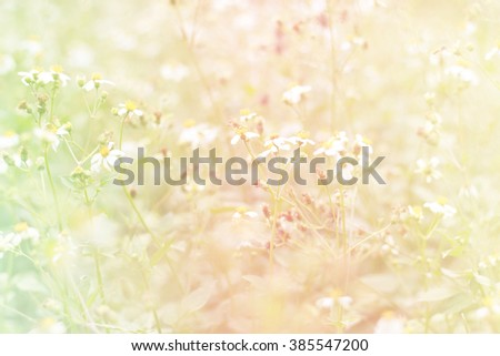 colorful Field and natural bokeh - stock photo