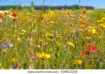 Colorful field of  wild flowers under a hot summer sun - stock photo