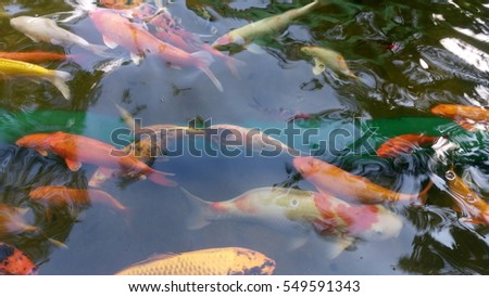 Stock images royalty free images vectors shutterstock for Colorful pond fish