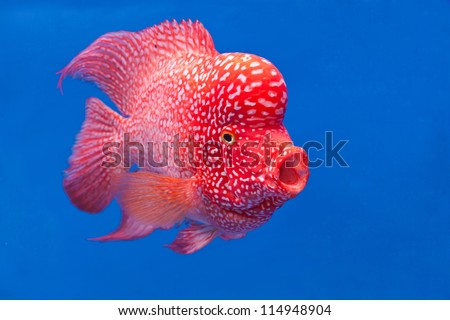 colorful fish swim under water in the calm ocean - stock photo