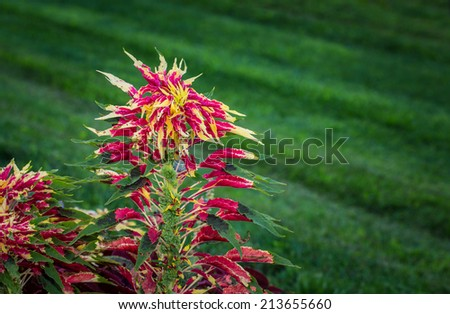 Colorful flower against green grass background with selective focus.
