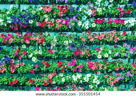 Colorful flower background,  - stock photo