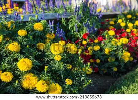 Colorful flower bed against rail fence and green grass background. - stock photo