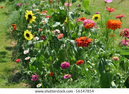 Colorful flower bed with butterflies
